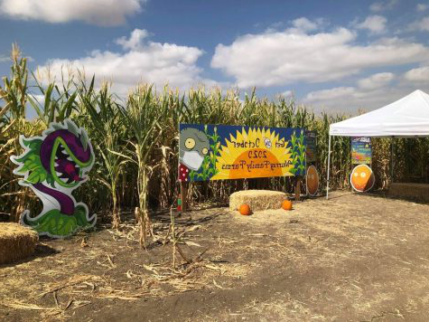 Beginning of the Plants vs Zombies corn maze.